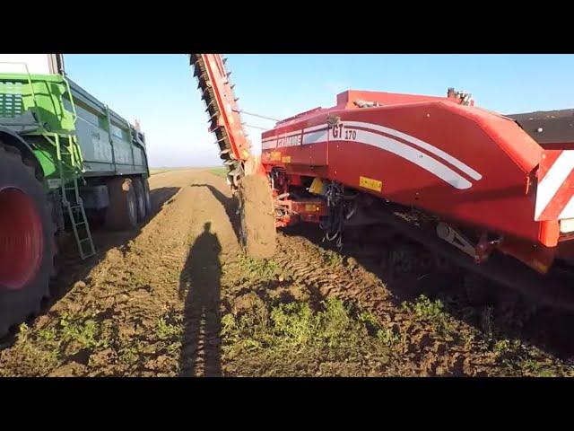 Arrachage des carottes 2018 : en bio