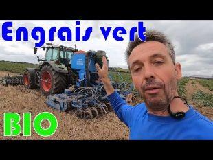 Semis d'engrais vert bio